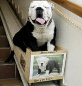 Stair Lifts For Dogs Stair Lifts Stairlifts
